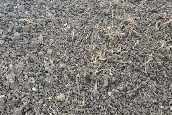 Aged cow manure product picture 2.