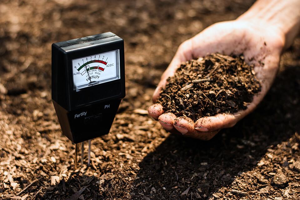 Using a pH metre to test topsoil.